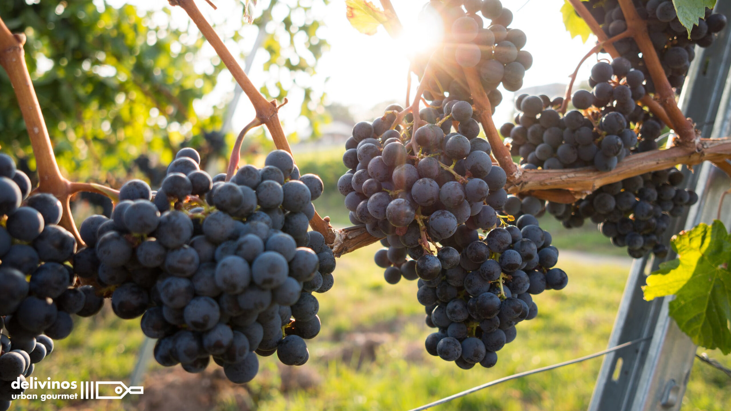 01-Regiones vinícolas más importantes del mundo