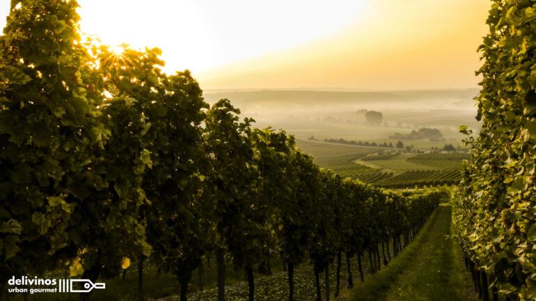 Regiones vinícolas más importantes del mundo