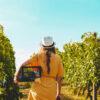 01_Conoces el proceso de elaboración de un buen vino