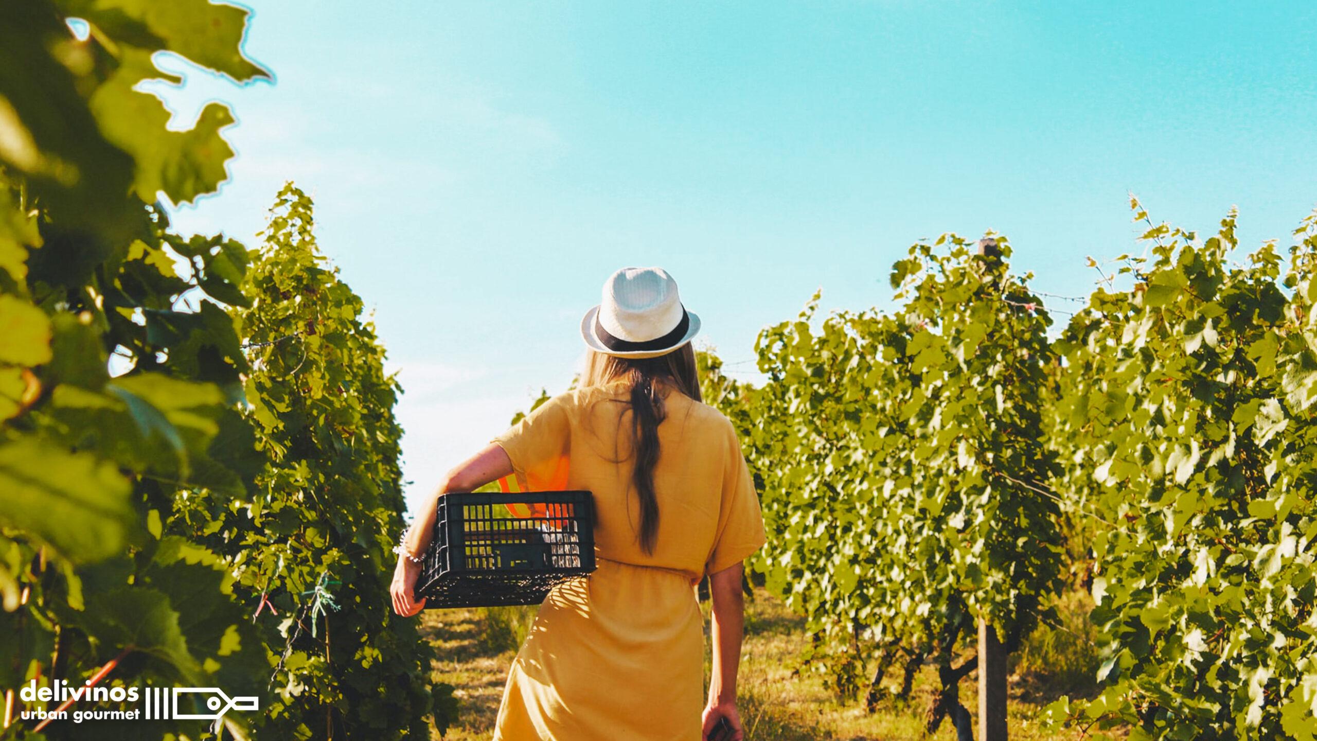 ¿Conoces el proceso de elaboración de un buen vino?
